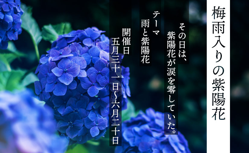 6月箱展MINI(mini10):梅雨入りの紫陽花